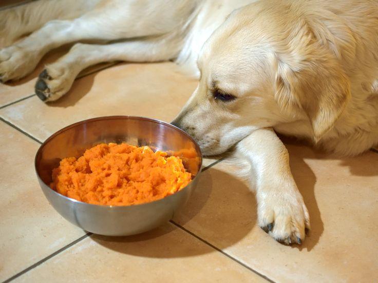 Rezept für Morosche Karrottensuppe für Hunde I Das hilft bei Durchfall