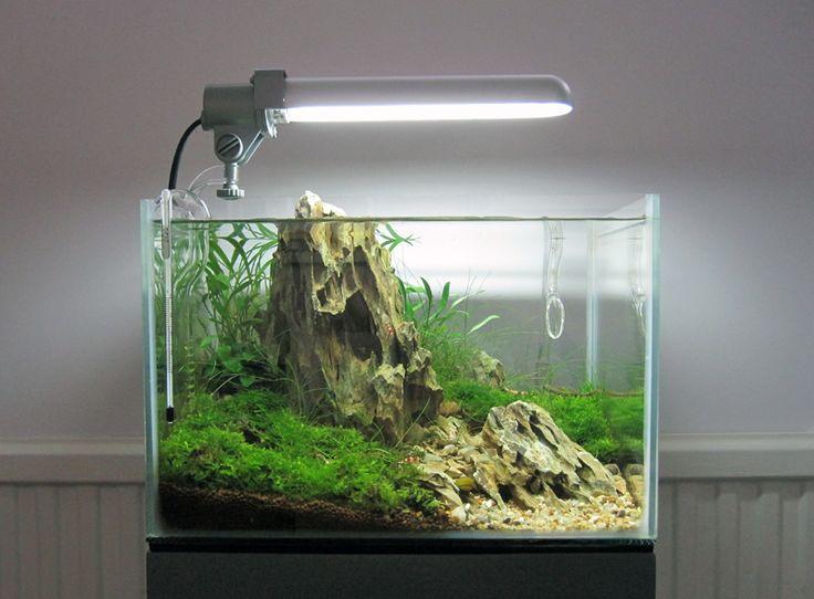 Iwagumi - Aquascaping Aquascape Aquariums Pinterest