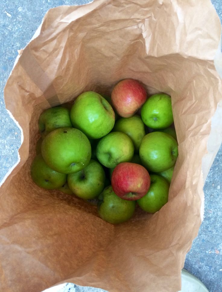 Apple picking bilpin. Nothing like the crunch of a freshly picked Granny Smith