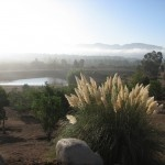 Beautiful misty mornings in the Valle de Guadalupe...