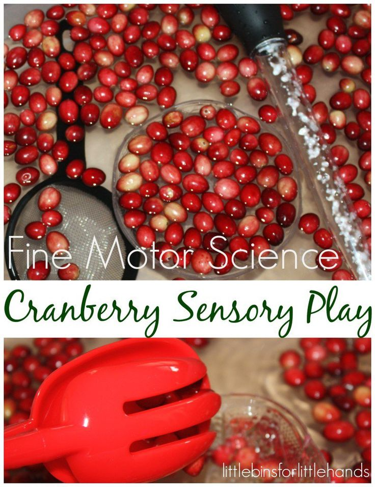 Cranberry science activity for Thanksgiving science and STEM! Practice fine motor skills too with a fall themed cranberry water sensory bin that doubles as a science sensory bin. Do cranberries sink? Can you demonstrate irreversible change? Use fine motor tools to strengthen hands and fingers. Perfect thanksgiving activity for preschool and kindergarten age kids.