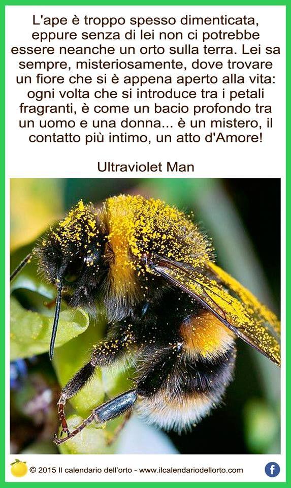L'ape è troppo spesso dimenticata, eppure senza di lei non ci potrebbe essere neanche un orto sulla terra. Lei sa sempre, misteriosamente, dove trovare un fiore che si è appena aperto alla vita: ogni volta che si introduce tra i petali fragranti, è come un bacio profondo tra un uomo è una donna... è un mistero, il contatto più intimo, un atto d'Amore!