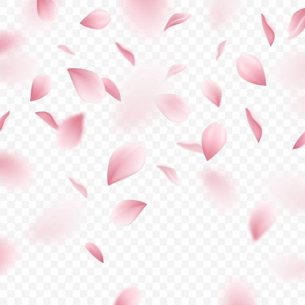 Download Falling Pink Sakura Petals Realistic Illustration For Free Cherry Blossom Petals Flower Background Wallpaper Sakura Flower