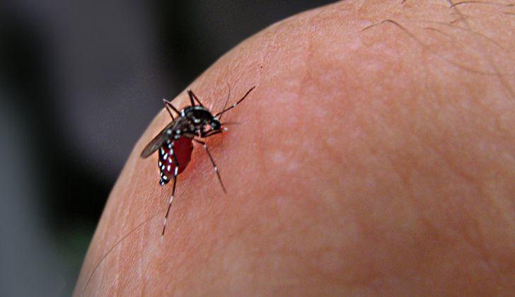 #Lanzan campaña contra el dengue pensando en los niños como agentes de cambio - LARED21: LARED21 Lanzan campaña contra el dengue pensando…