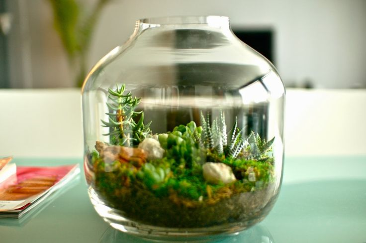 049+BEAUTIFUL+TERRARIUMS+SMALL+AND+TINY+GARDENS+YOU+CAN+GROW+ON+TABLE+TOPS.jpg (1280×849)