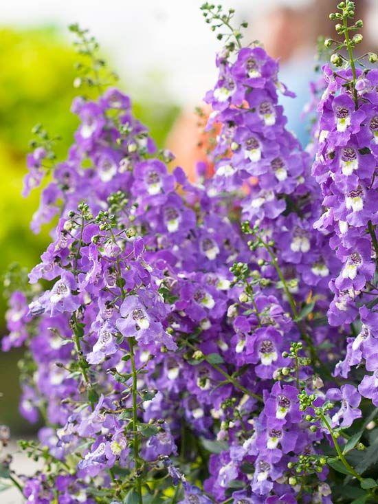 best purple  white flowers images on, Beautiful flower