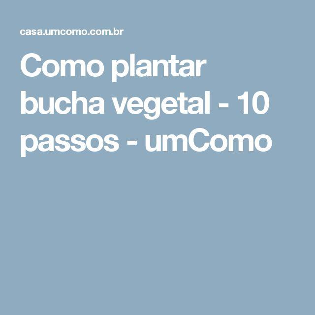Como plantar bucha vegetal - 10 passos - umComo
