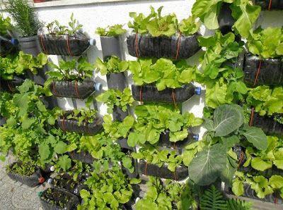 Hoy endíano se necesita tener mucho terreno para poder cosechar nuestras propias verduras. A continuación les muestro algunos ejemplos:  ...