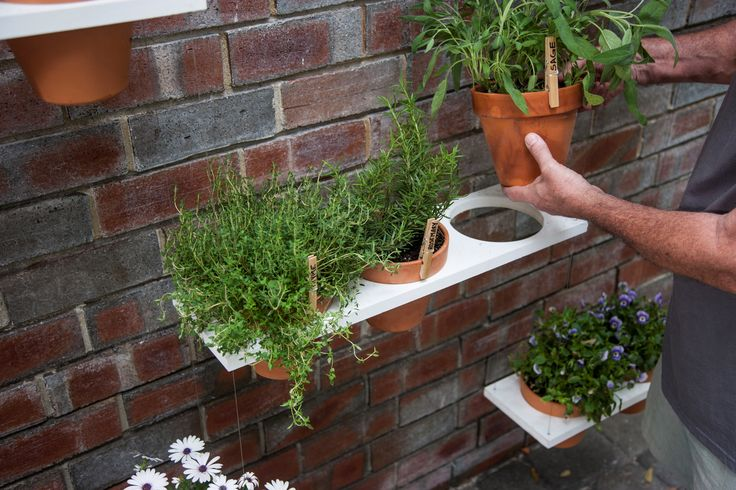 You don't need a big backyard to garden. You can use anything from your roof to a brick wall to grow your plants.
