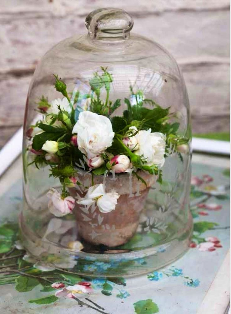 17 best images about cloches apothecary jars altered for Garden cloche designs