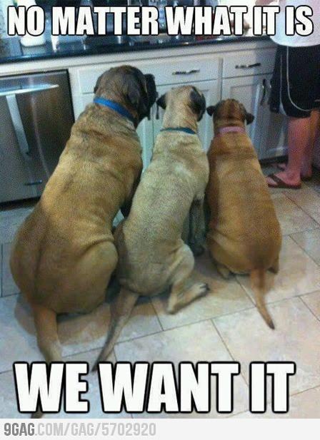 Dog Logic... So true, until I drop a lemon or onion slice ;)