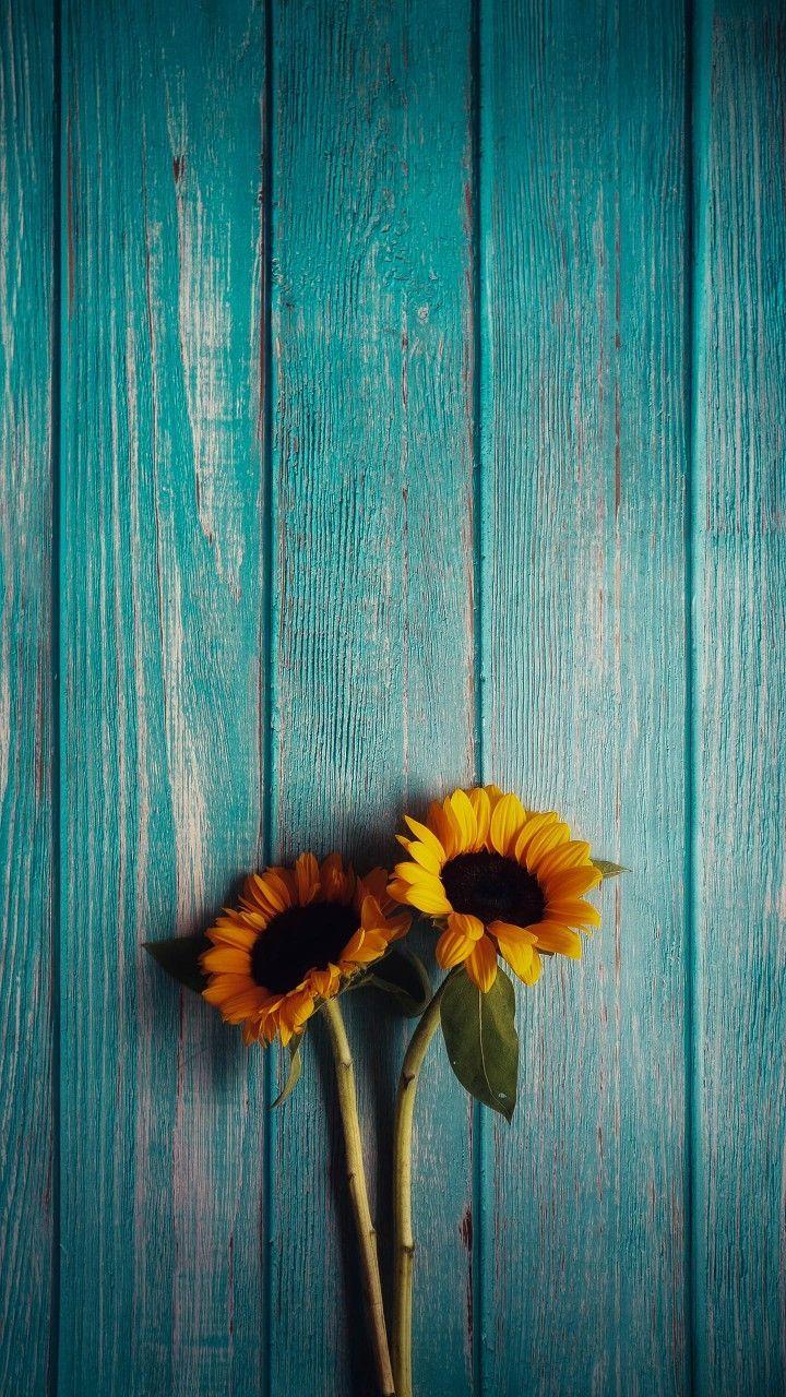Soumi Sunflowerwallpaper Redline In 2020 Nature Iphone Wallpaper Flower Background Wallpaper Sunflower Iphone Wallpaper