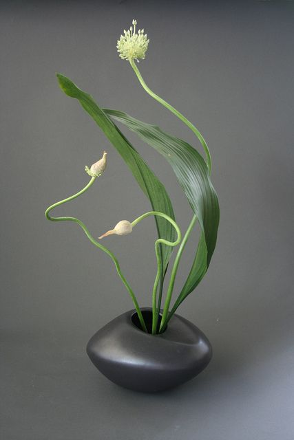 Ikebana using curved lines by sogetsudc, via Flickr