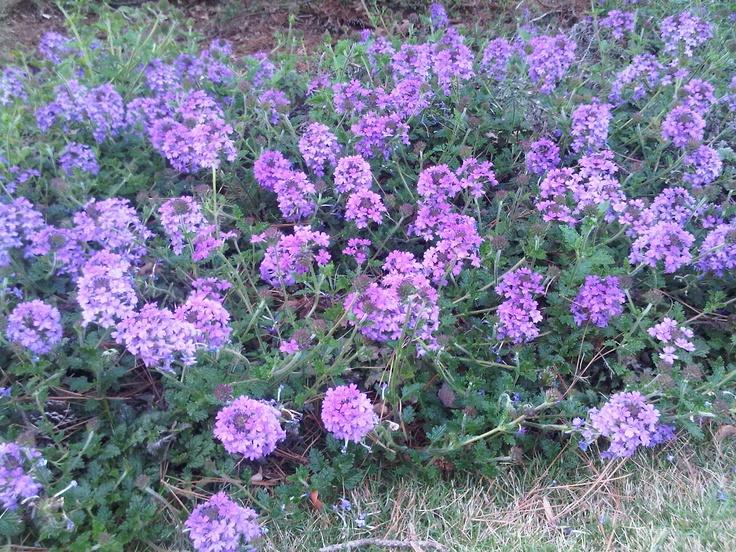 Floralia43