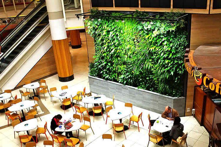 Internal green wall, Brisbane