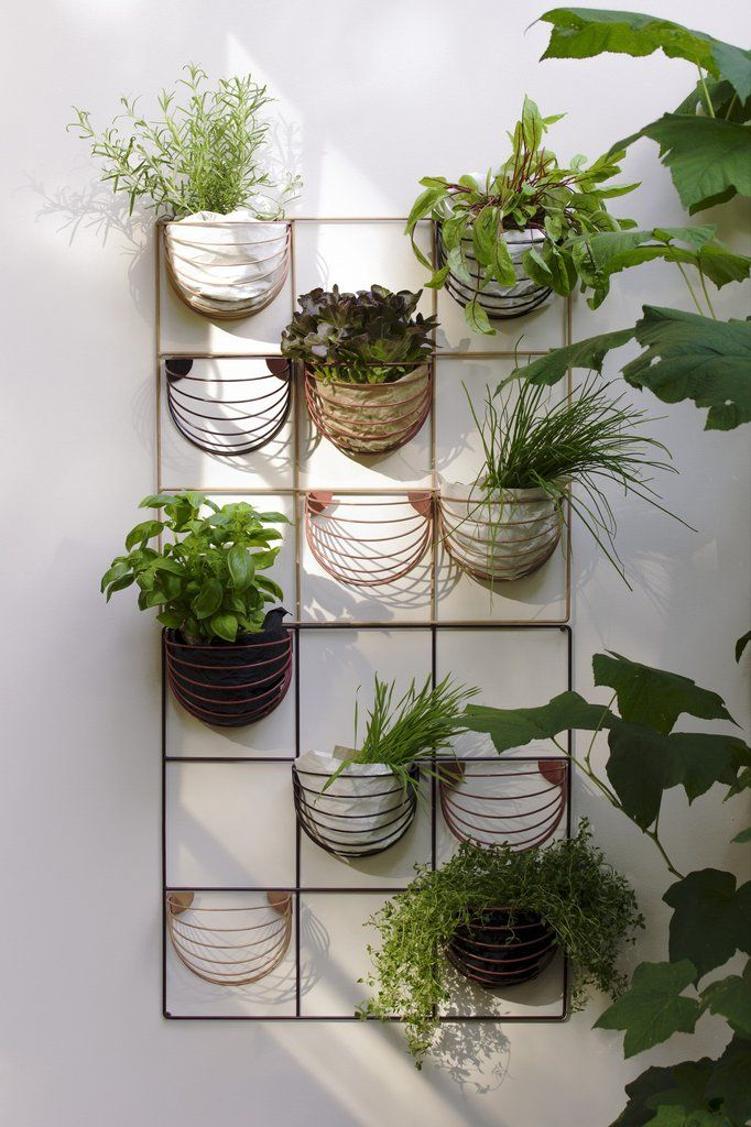 Herb wall | Baskette wall basket | wallment wall grid | vertcal gardening