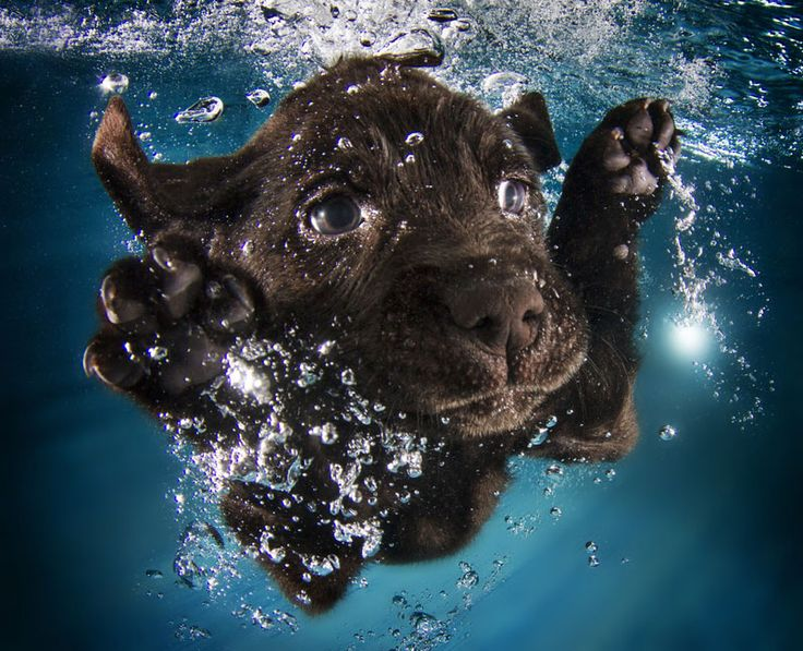 Underwater Photos of Puppies Diving Into Water by Seth Casteel