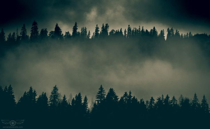 Dark Mooded Forest - null