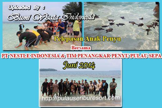 Kegiatan Pelepasan Anak Penyu di Pulau Sepa Pulau Seribu .. Bersama PT NESTLE INDONESIA  TIM PENANGKARAN PENYU PULAU SEPA RESORT KEPULAUAN SERIBU ..