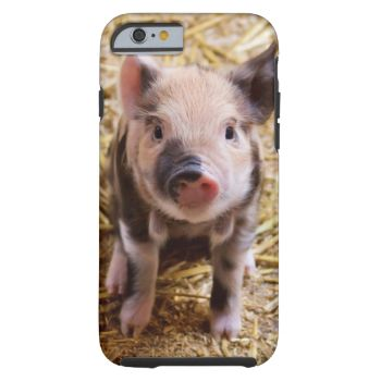 add text or upload your own image #pig #pigs #piglet #piglets #animal #animals #farm #phone #case #cases #outdoors #photography #phones #cellphone #covers #android #smartphone #iphone #custom