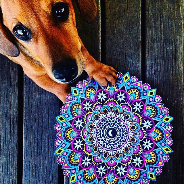 Los Animales son Buenos Amigos, no hacen preguntas y tampoco critican... ॐ George Eliot (Seudónimo de Mary Anne Evans, Novelista Británica)