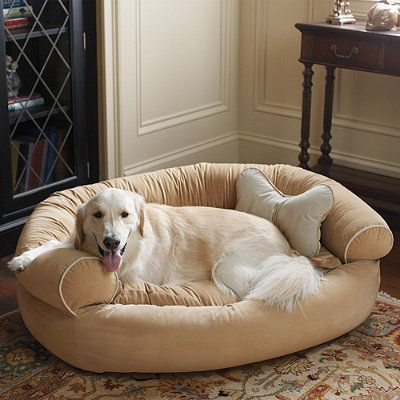 Comfy Couch Pet Bed Titan Lucy Pinterest