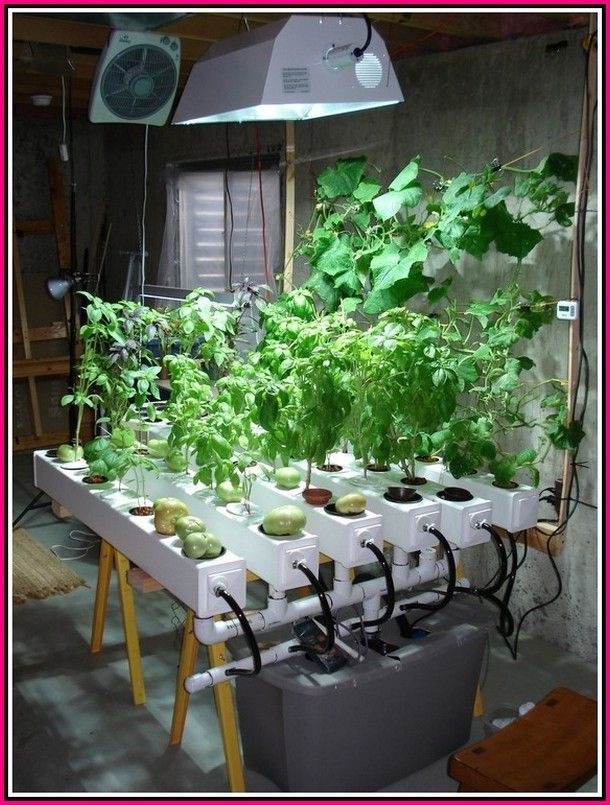 Simple Garden Ideas Thumb Not Green Try These Horticulture Ideas Simple Garden Ideas Indoor Aquaponics Indoor Vegetable Gardening Hydroponics Diy