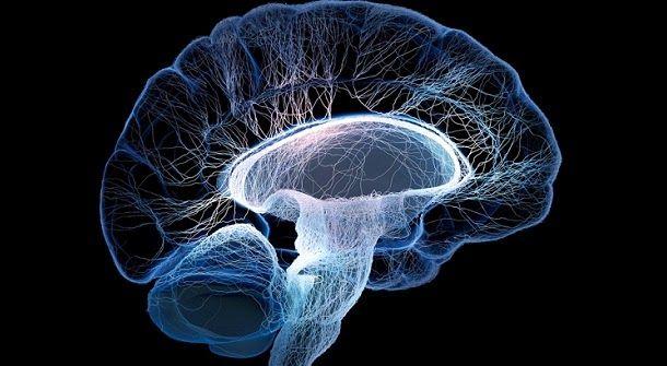 Cientistas identificaram uma parte do cérebro única nos seres humanos, ligada a processos de pensamento elevados.