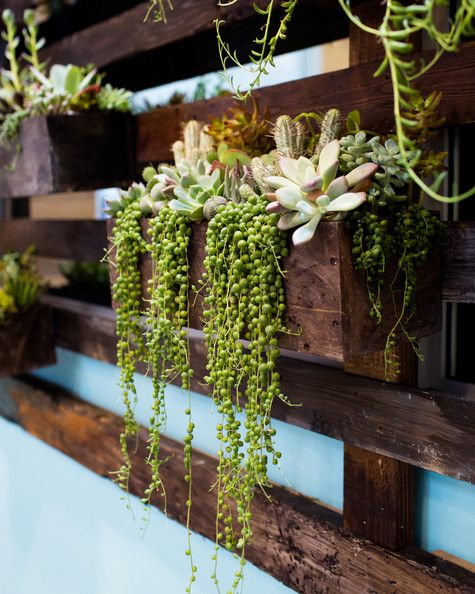 Work Space - A vertical succulent wall made of reclaimed wood from shipping pallets at Jessica Alba's Honest Company office