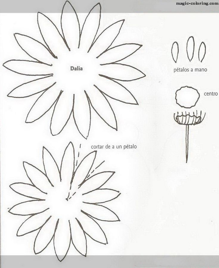 MAGICCOLORING Dahlia flower