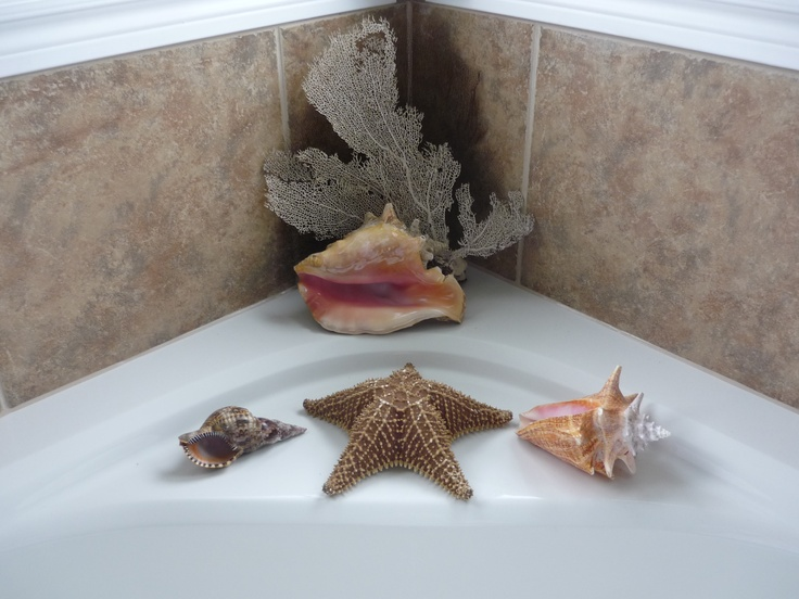 Shells from Jamaica and Grand Cayman surrounding my jacuzzi