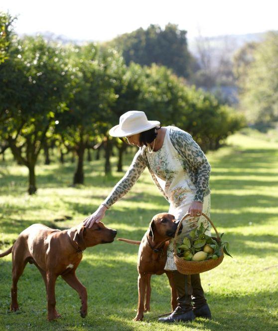 VISI / Articles / Stellenbosch Winelands Villa