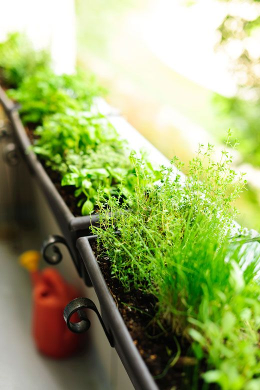 How To Grow Herbs In Pots and other Containers