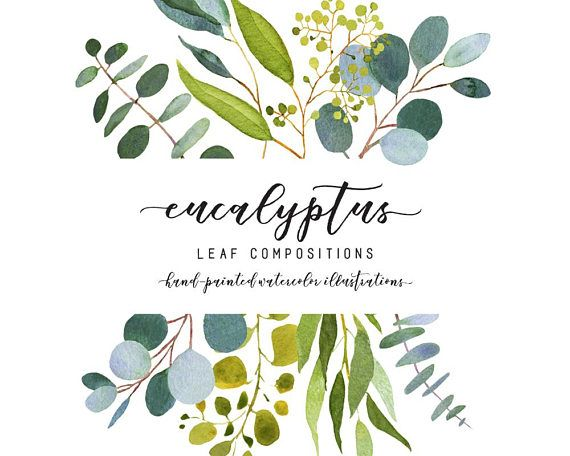 Eucalyptus Clipart Watercolor Illustrations Wedding Greenery