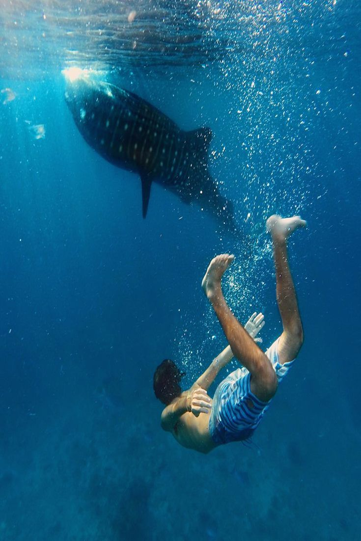 """Oslob - Cebu, Philippines leonardomedici """"Swimming with the gentle giant in the Philippines, how small are we"""""""