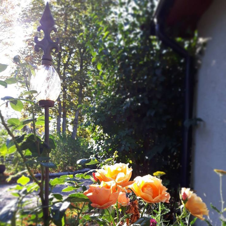 Värmande orange en solig höstdag på ön. Min kropp har sagt ifrån och snart bTlir det välförtjänt semester i Toscana. Väl där ska jag hitta ny inspiration, planera framtiden, våren, kommande kurser och studiecirkel om trädgård och feng shui 🍃🍃🍃 Warming orange colours this sunny day. In a few week time we're going on a well deserved vacation to Sienna in Italy.