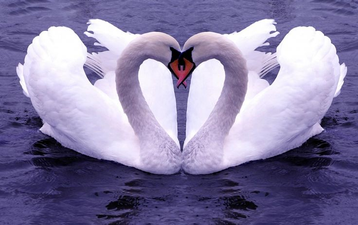 best images of love birds Lastest -   Cute Love Birds Wallpapers Odd Wallpapers with best images of love birds Lastest   1280 X 805  Download  best images of love birds Lastest wallpaper from the above display resolutions for High Quality Widescreen 4K UHD 5K 8K Ultra HD desktop monitors Android Apple iPhone mobiles tablets. If you dont find the exact resolution you are looking for go for Original or higher resolution which may fits perfect to your desktop.   50 Love Arousing Love Birds…