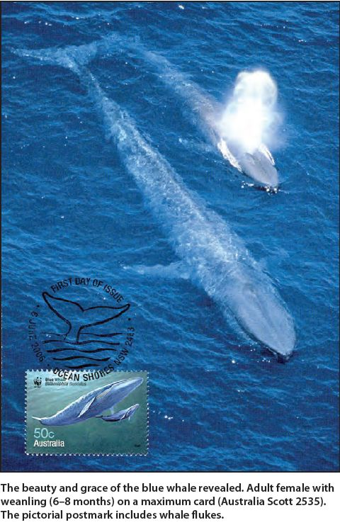 Lovely first day cover of blue whale with calf from Australia http://stamps.org/userfiles/file/AP/feature/Feature_03_14.pdf … pic.twitter.com/LD7ev2BK1i