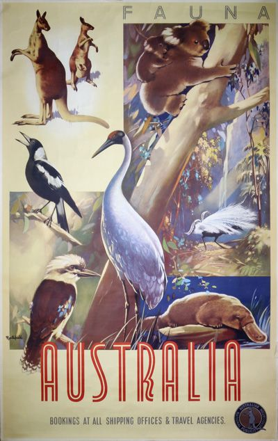Australia Fauna by Northfield, James (1887-1973)