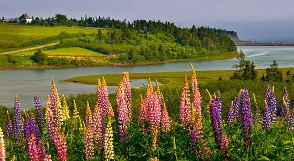 Spring, Bay of Fundy, New Brunswick Canada