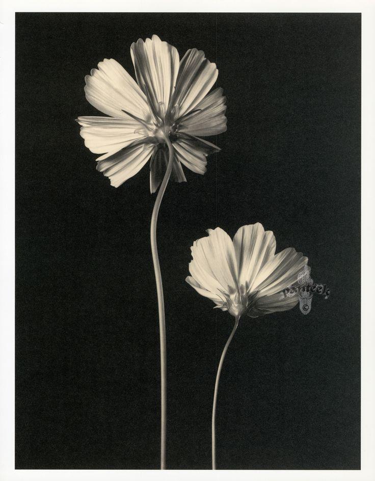 Tom Baril Botanical Prints from Botanica