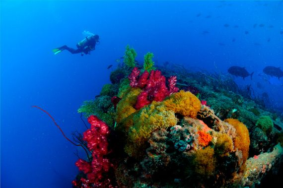 The best diving in the world: 10 sites you have to dive before you die - Queensland Blog
