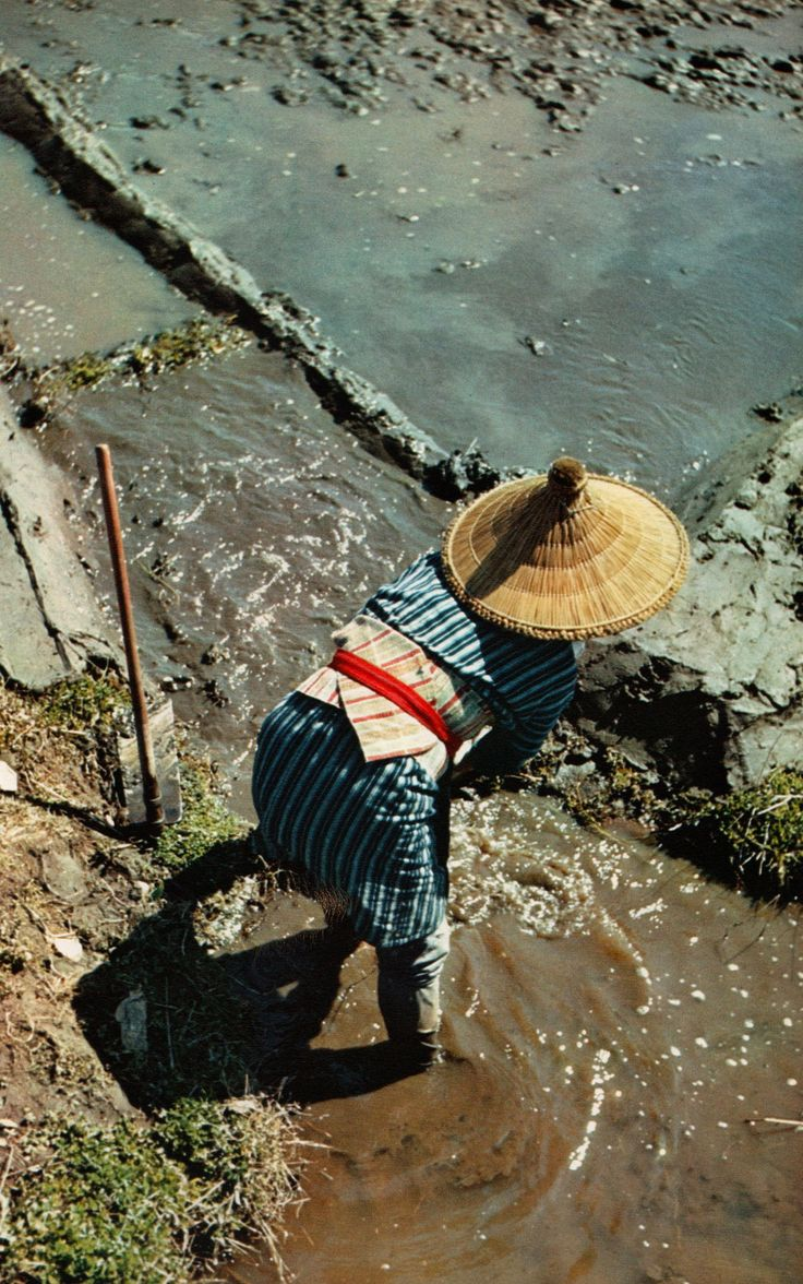 Rice planting in Japan, 1955: photo by Bischof, Werner