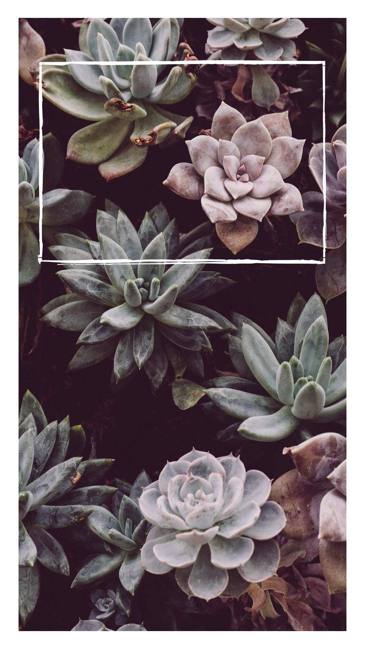 Blumen – StudioStories.de | Content Creator & Pinfluencer | Fotografie & DIY