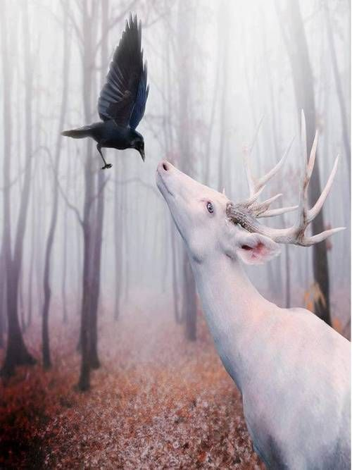 """Raven To The White Deer:  """"Have no fear friendly deer ~ for you and I belong to the forest where we both adhere ~ your handsome presence has given me an idea; come closer, let me whisper in your ear..."""" (Poem Written By: Lynn. January, 2015.)"""