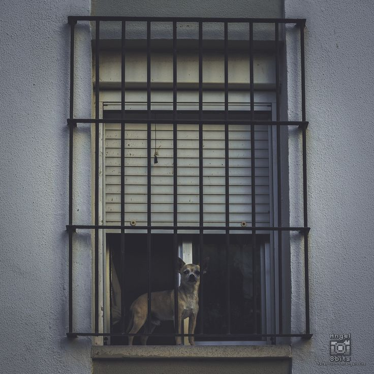 Perro callejero - De paseo por cadiz