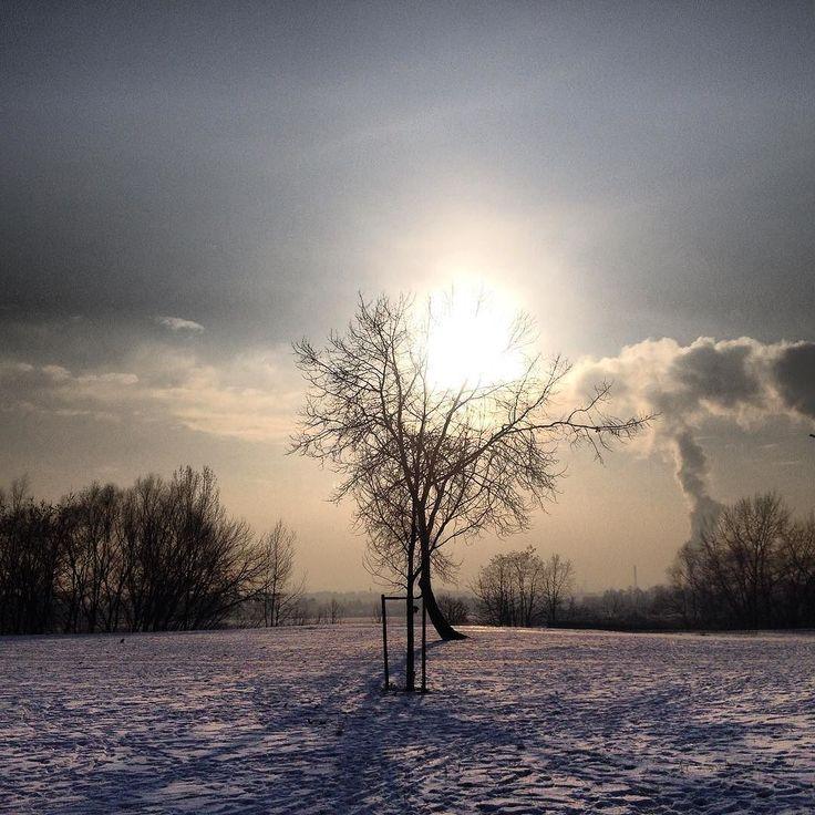 Słońce przycupnęło dziś na chwilę na drzewie przy #encek.u  #nowahuta #zima #widoki #niebo #winter #snow #sun #sky