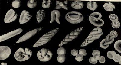 Тесто, разделанное на булочки разной формы