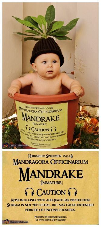 """DIY Harry Potter Mandrake Baby Costume from Costume Works.The cutest baby costume ever.For an awesome archive of DIY Halloween Costumes go here.You can find the high resolution version of the mandrake Label    (1600x1236),   created by Crafty Lil' Thing HERE.To get the largest size, click on the mandrake label, thenright click, then""""save image as"""".*If you like this label, save it ASAP. I have spent so much time trying to track down printables from dead blogs, or blogs that have pulled…"""