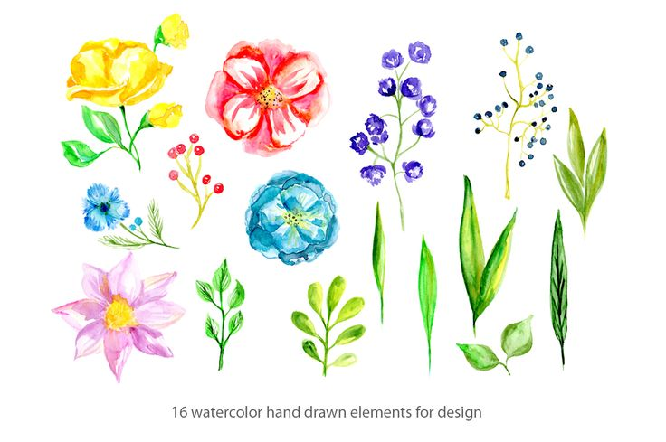 16 Watercolor floral elements by WatercolorS on @creativemarket
